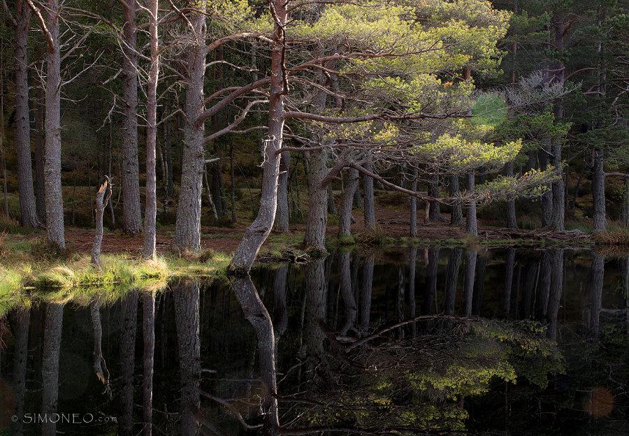 Uath Lochans, Glen Feshie, Inshriach Forest, Schotland
