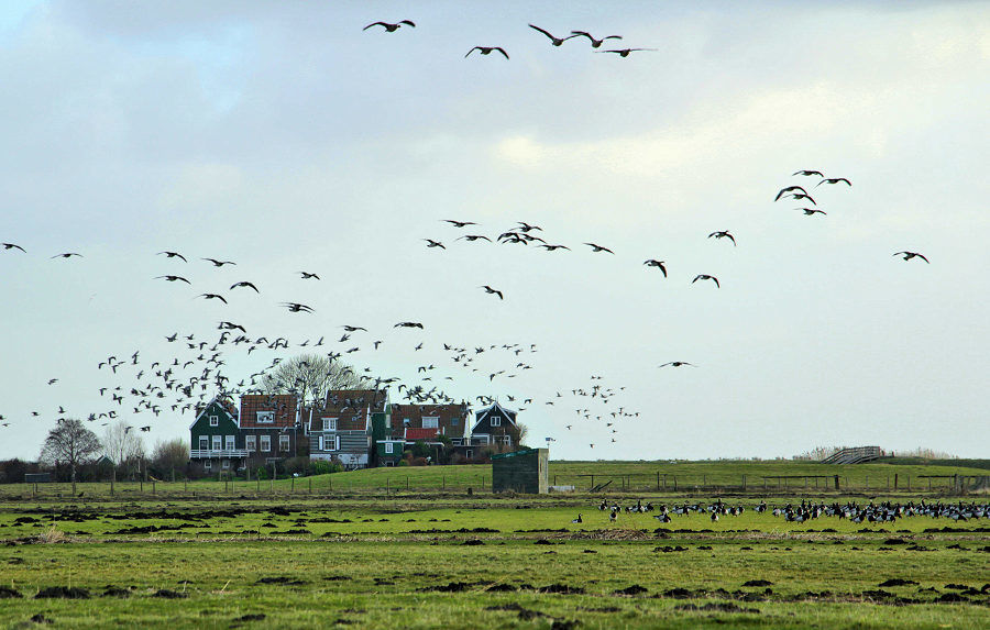 Marken, vogelparadijs in Waterland