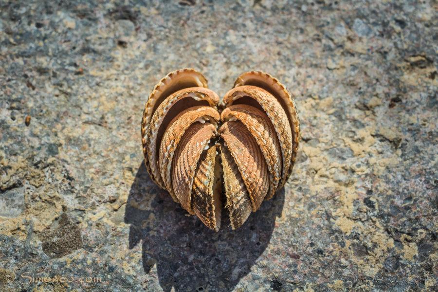 A heart made of seashells