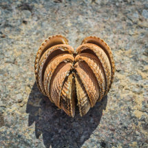 A heart made of seashells