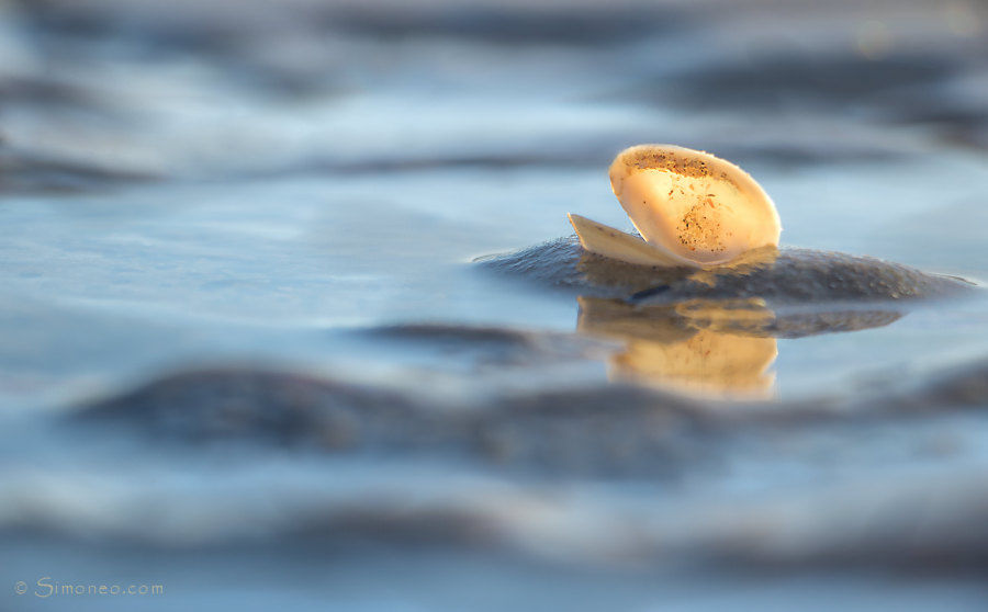 Summer: seashell in the waves