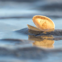 Shell in the waves