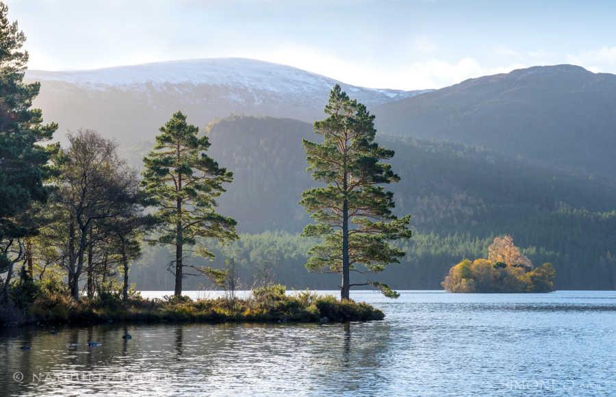 Schotland: Loch an Eilein in het Cairngorms National Park