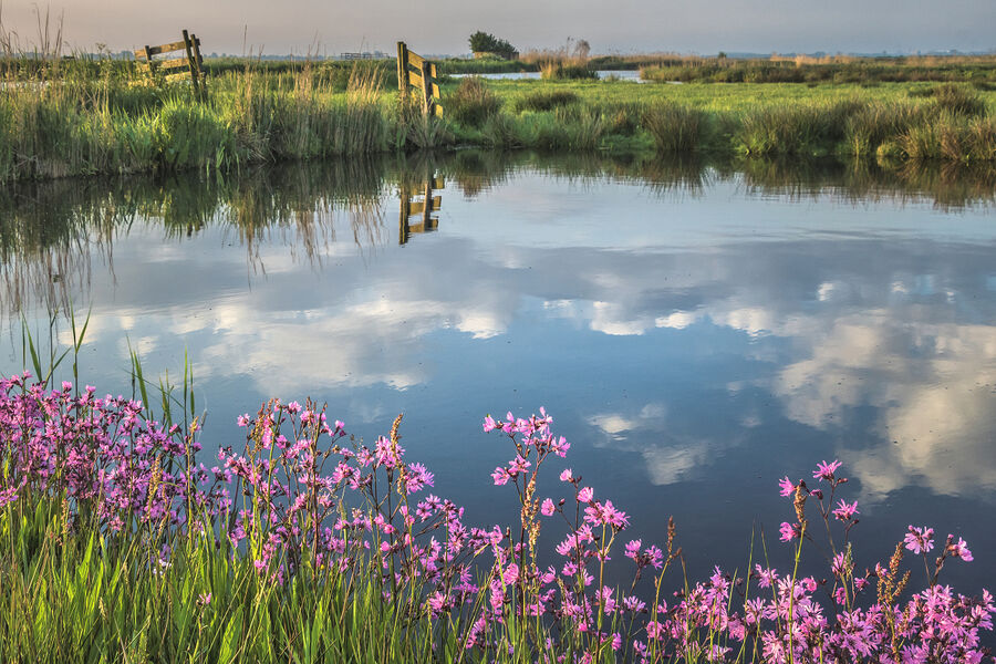 A Waterland morning