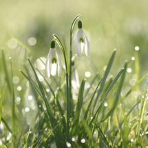 In dew