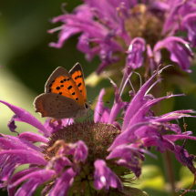 Fire, Small copper