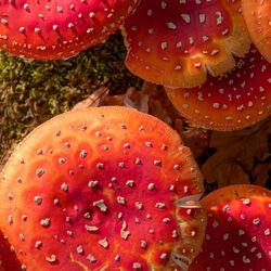 workshop herfstfotografie 'heftige herfst'