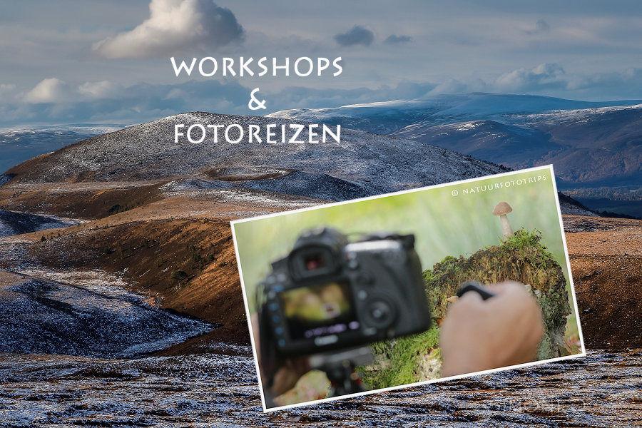 Workshops en fotoreizen