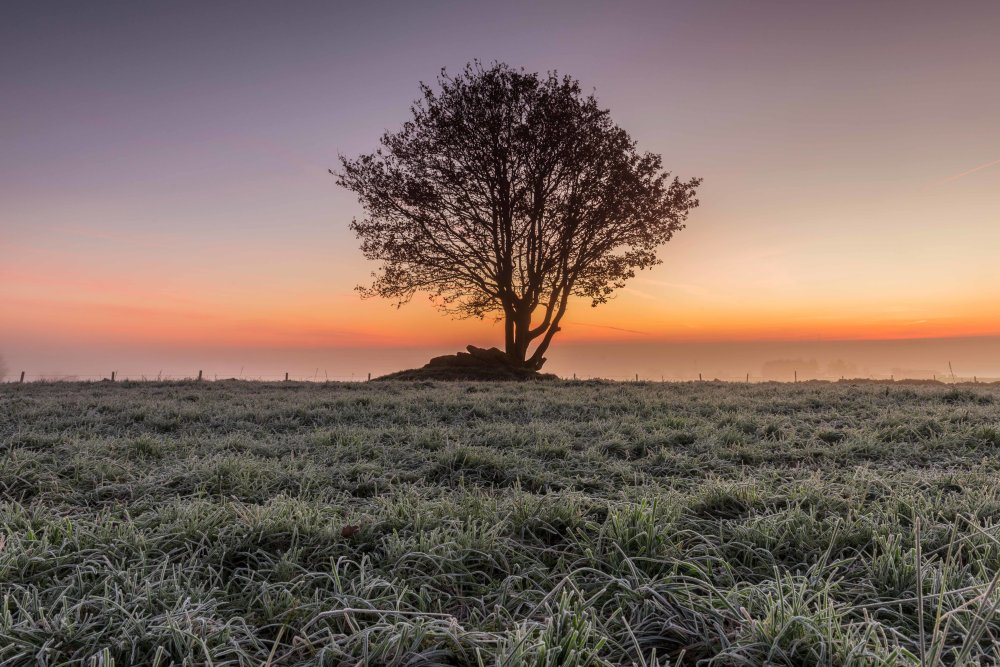 Lone Sunrise