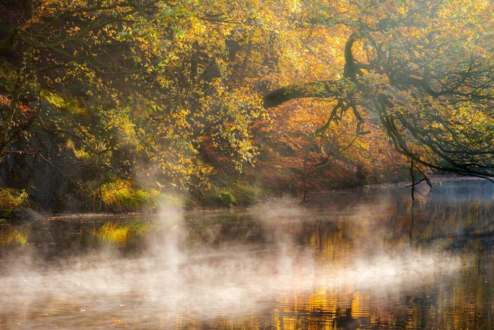 Dancing Mist