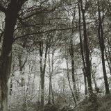 Tremaine woods