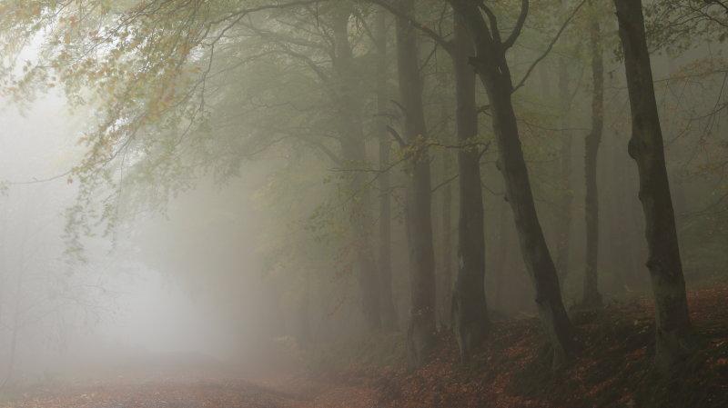 Balmullo Hill Fife in fog