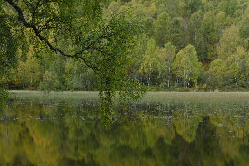 Aviemore early autumn