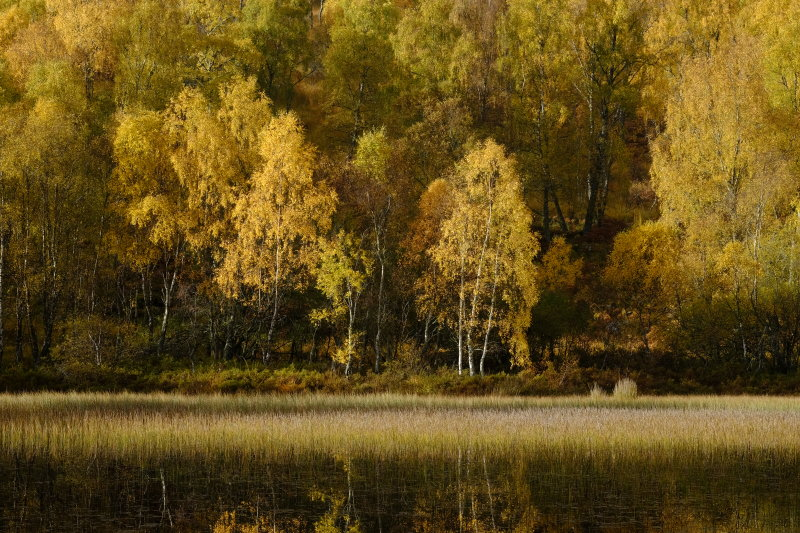 Aviemore Autumn