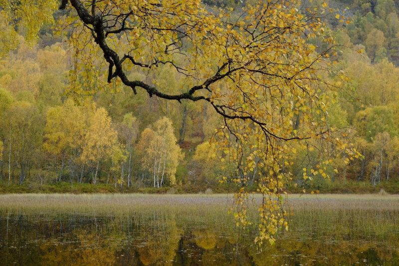 Aviemore in Autumn II