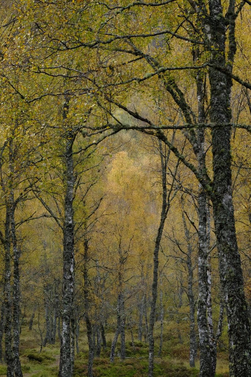 Aviemore in Autumn III