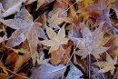 Tayport garden leaves