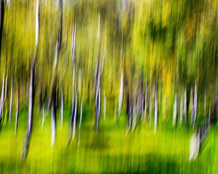 Autumn Glade, Glenesk