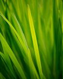 Reeds, Ayrshire