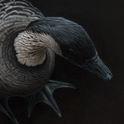 Hawaiian Geese