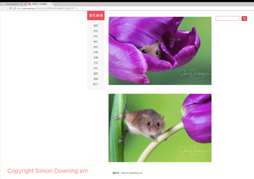 Field Mice in some foreign website. (Stolen)..