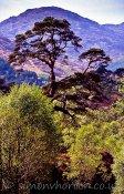 Forest near Glenfinnan