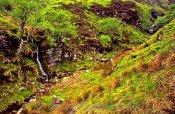 Blackden Brook Waterfall