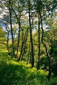 Woods by Kinder Reservoir