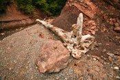 Bay of Fundy 'Debris'