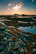 Low Tide at Lobster Cove