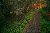 Trail by Lobster Cove Lighthouse