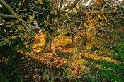 Wakering Hedgerow