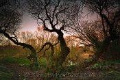 Friars Park Lake-side Wood