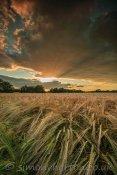 Godbeams over crops