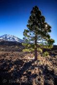 Teide and Lone Pine