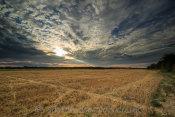 Great Wakering Fields
