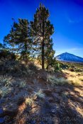 Teide from the east