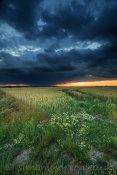 Great Wakering Farm Land