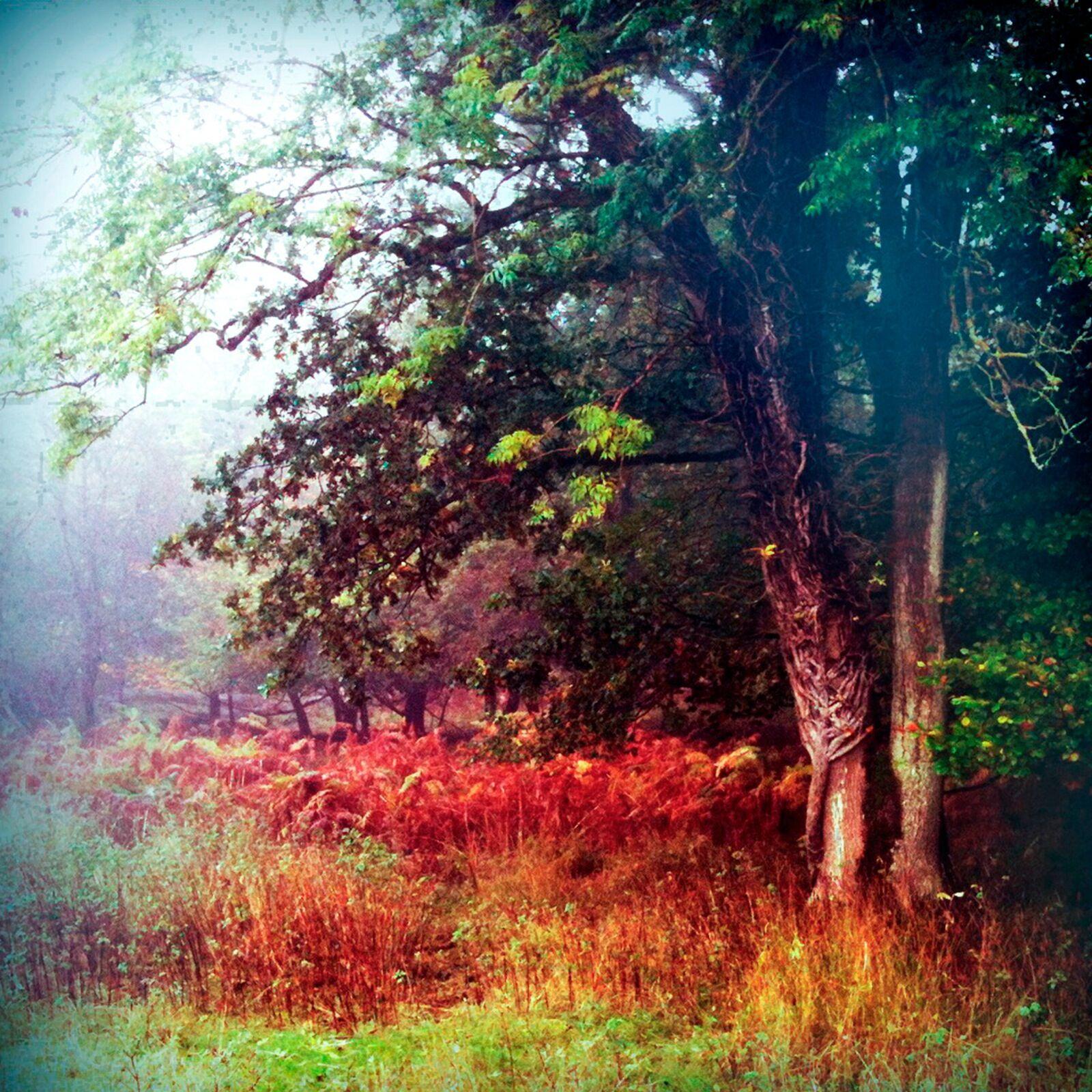 To Autumn no55