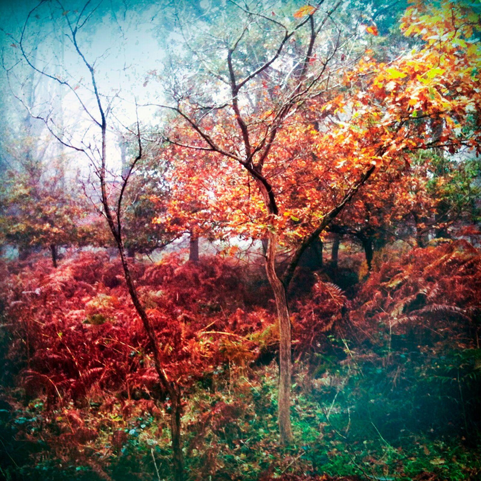 To Autumn no22