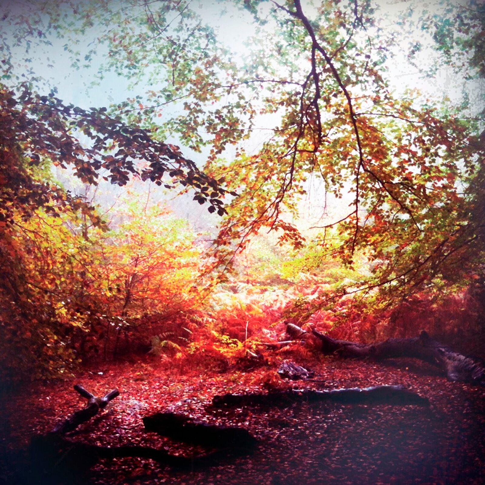 To Autumn no48