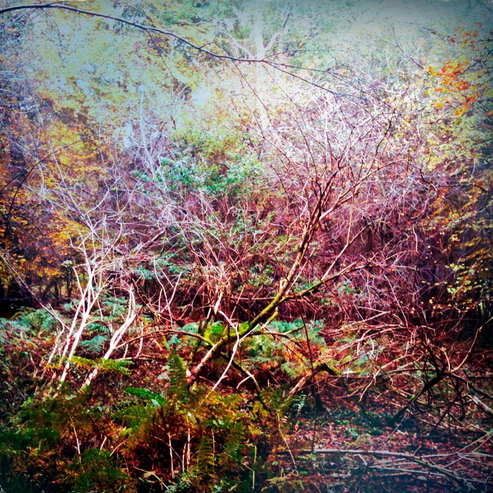 To Autumn no1