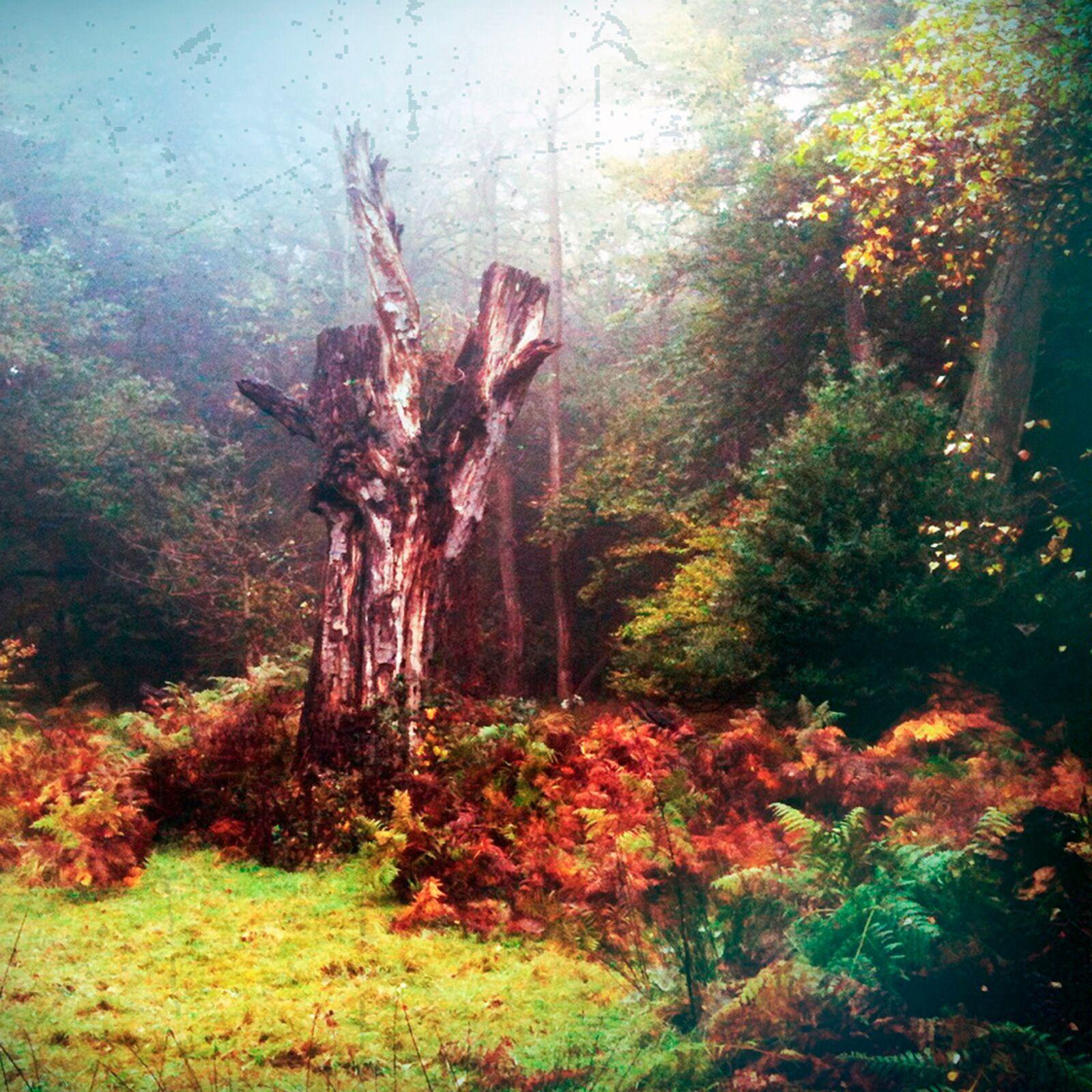 To Autumn no38
