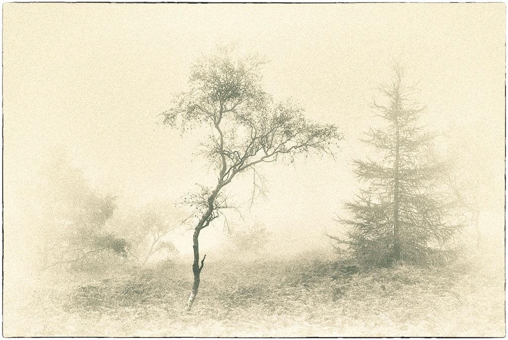 Trees On The Wrekin