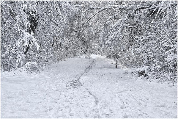 Dec-Telford Town Park 01