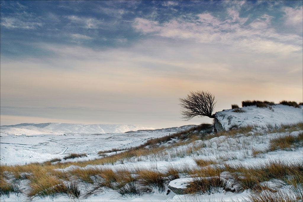 Winter Tree On Moel Siabod