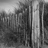 Dune Grass Fence DSCN1159