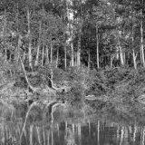 Fraser River Reflections