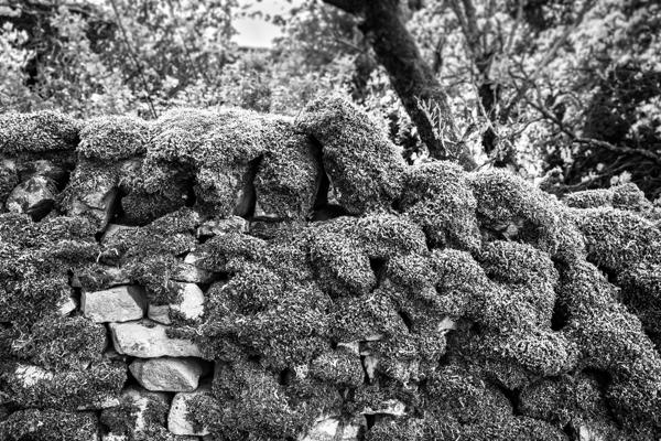 Mossy Rock Wall DSF8063