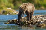 Bear Fising